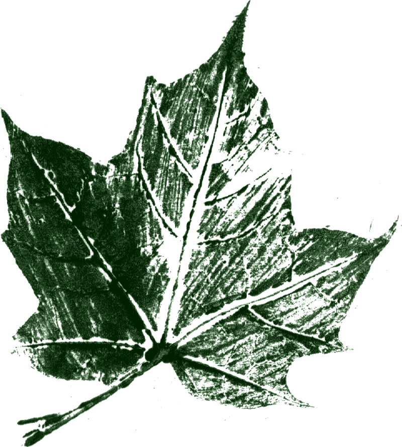 Transparent photography leaf. Printed texture png