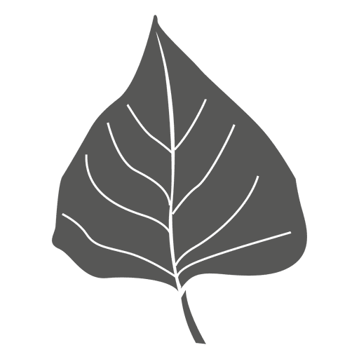 Transparent photography leaf. Birch line stroke png