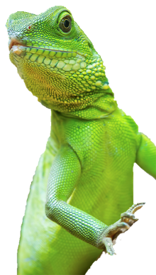 Transparent scales reptile. Awareness day squizzes bearded
