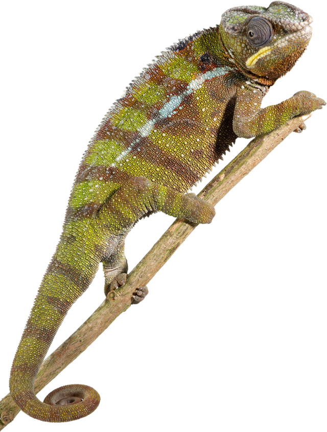 Transparent scales reptile. Types of reptiles facts