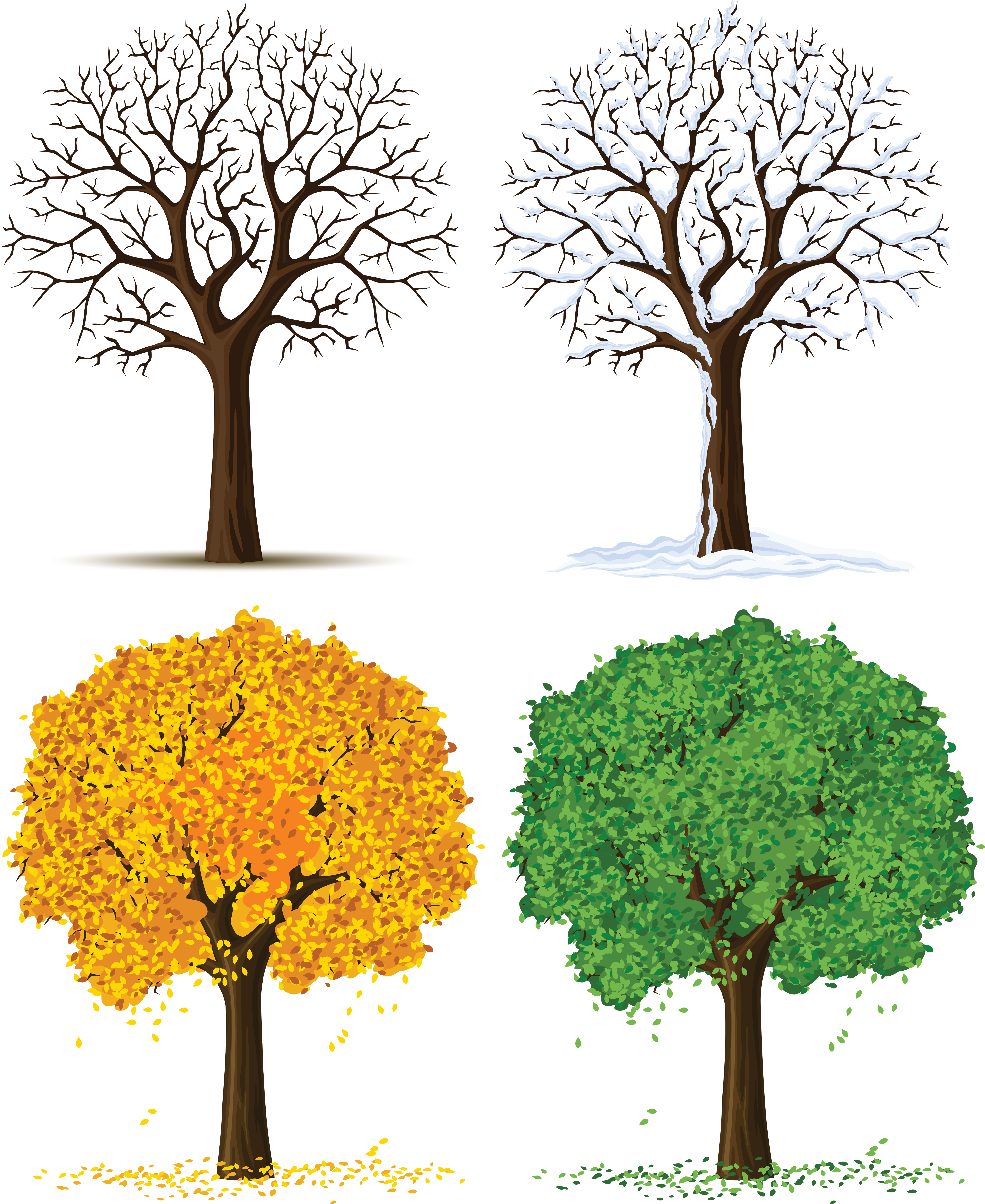Transparent seasons clipart. Four trees png gallery