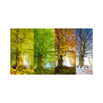 Transparent seasons sensational. Show and tell on