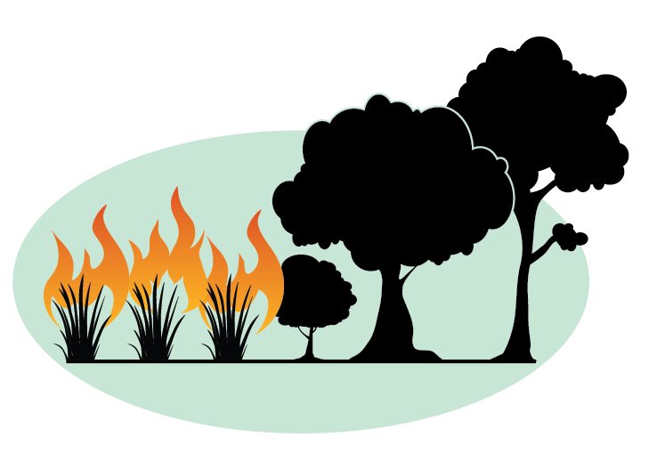 Transparent seasons tree cycle. The grass fire on