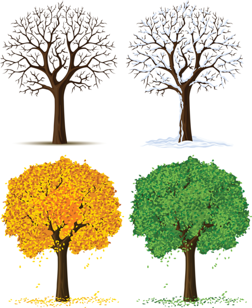 Transparent seasons tree cycle. Four png images all