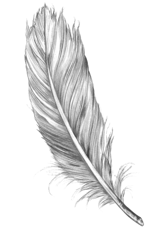 Transparent feathers hipster. Tumblr sidebar google search