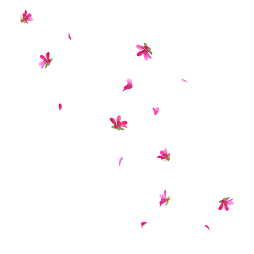 Transparent sidebar flower. Themes by mandrakescry