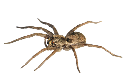 Transparent spider png. Images free download pngmart