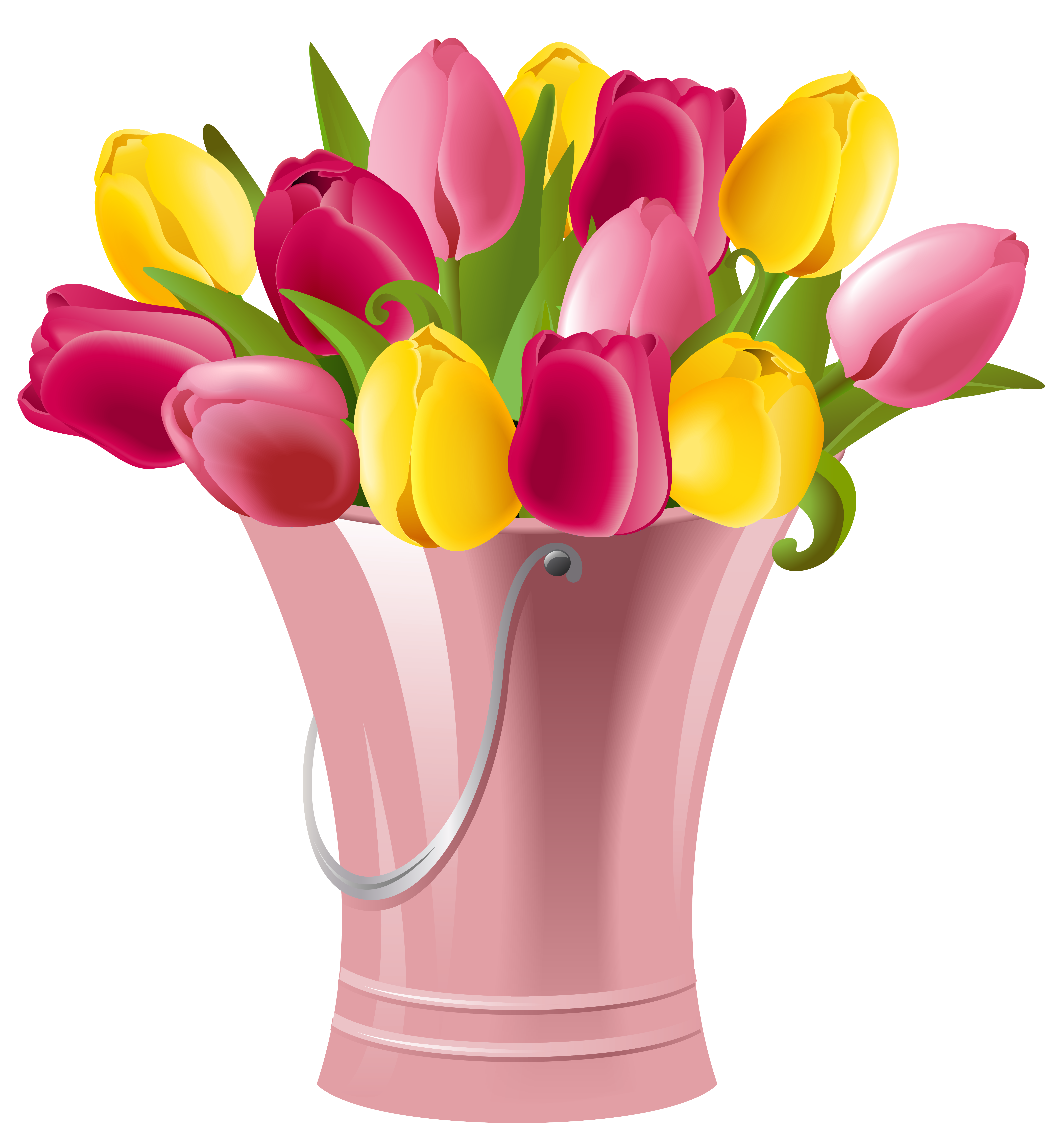 Transparent spring tulip. Bucket with tulips png