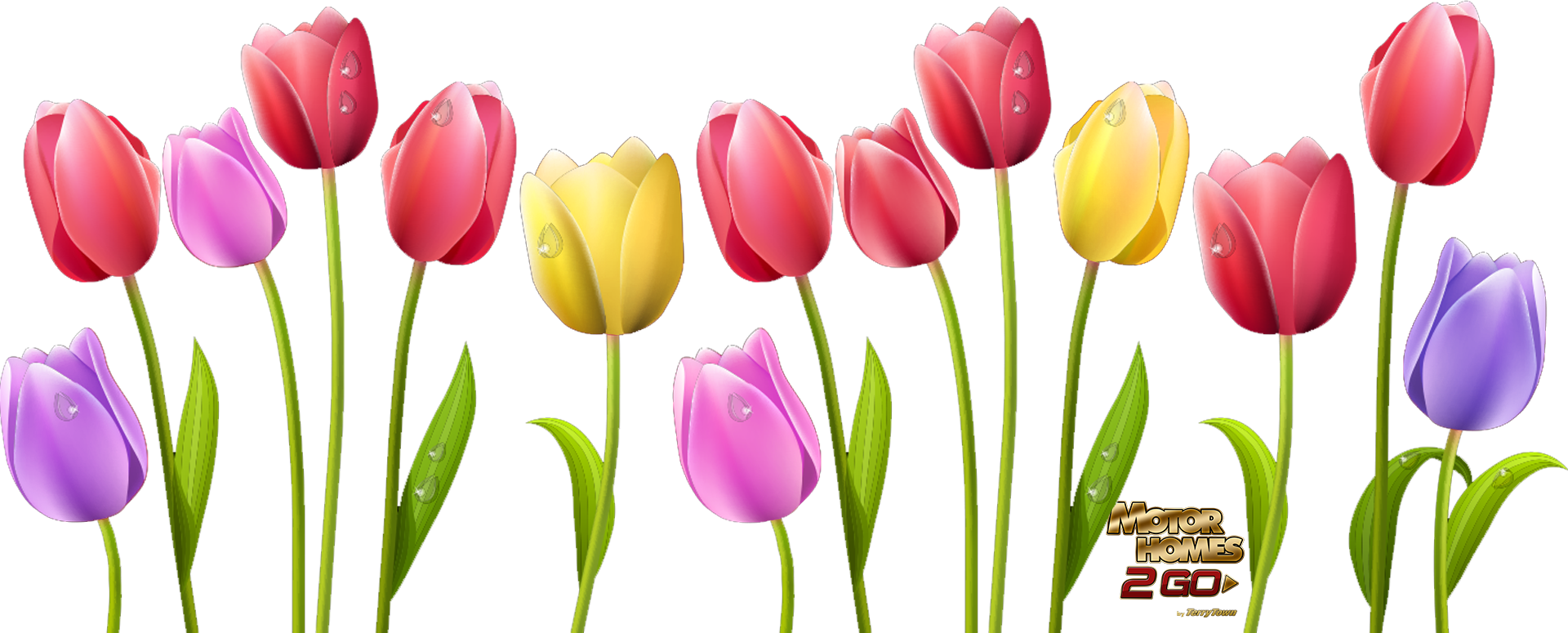 Transparent spring tulip. Collection of clipart