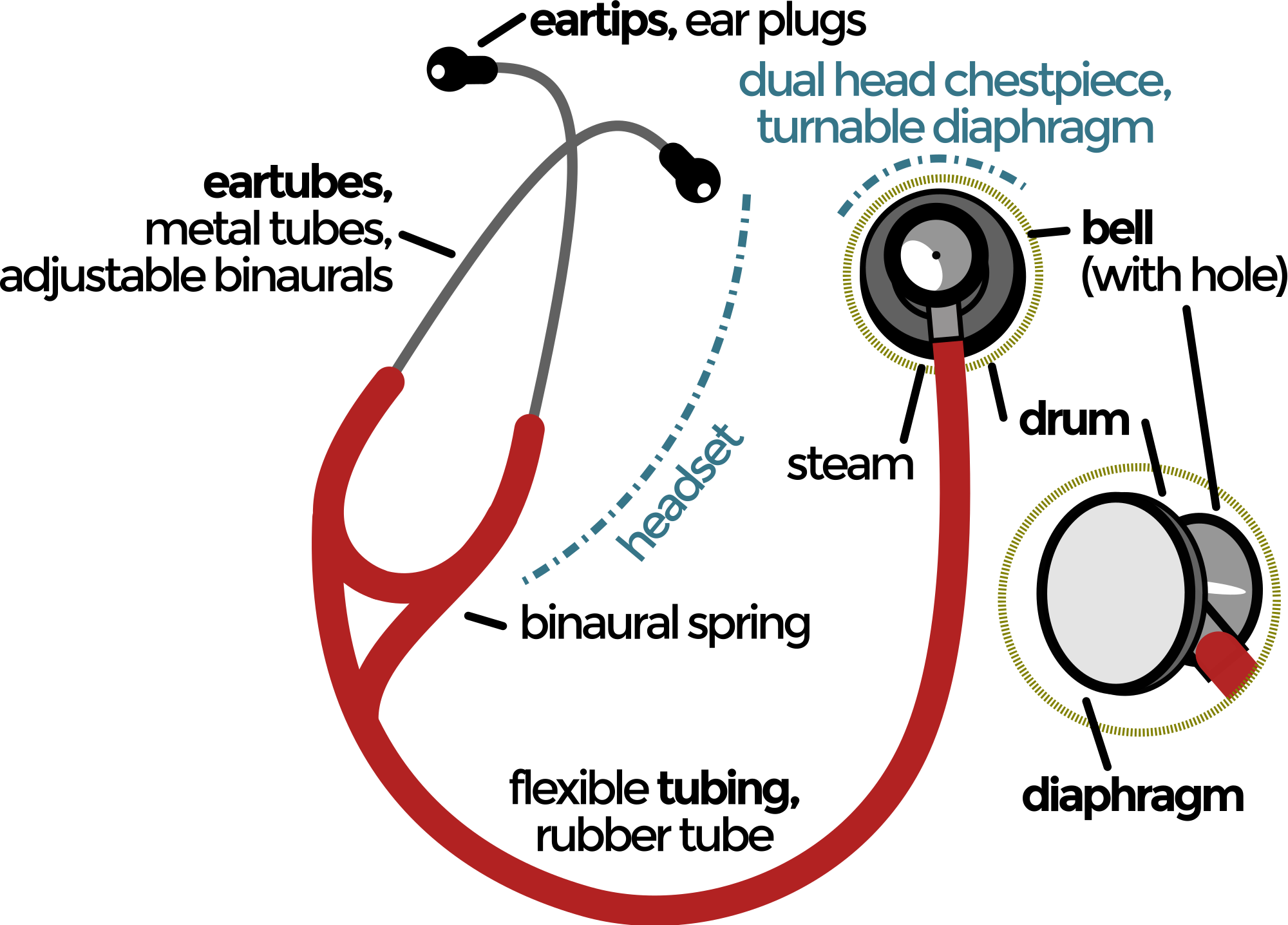 Transparent stethoscope wikipedia. Parts of a binaural