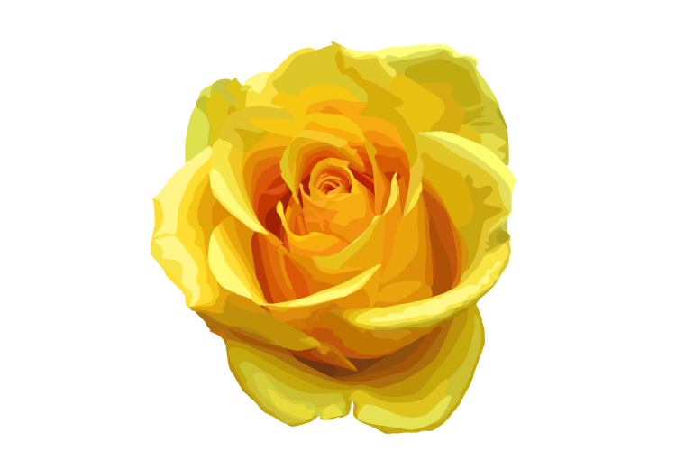 Transparent tea yellow. Rose png image vector