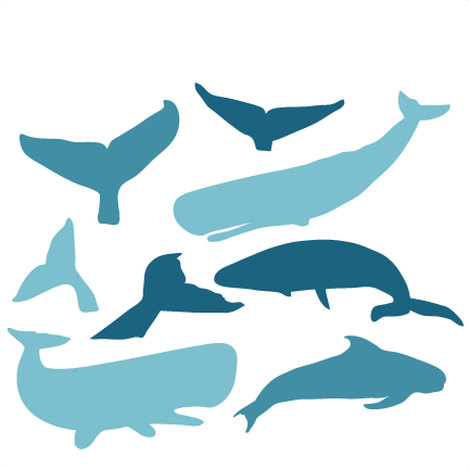 Transparent whale svg. Scrapbook cut file cute