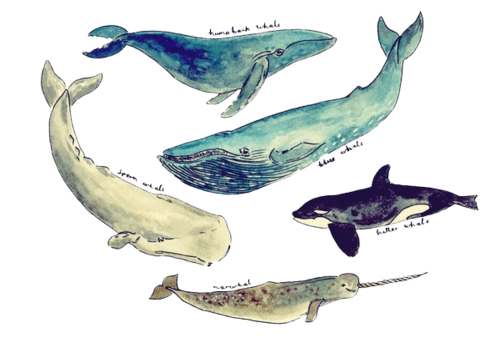transparent whale tumblr aesthetic