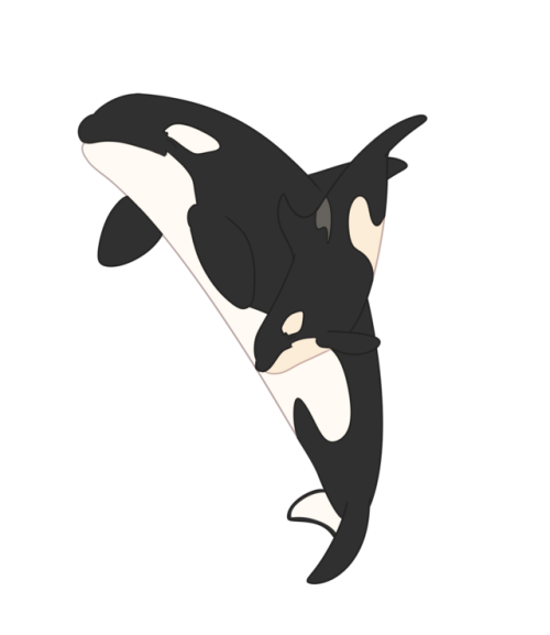 Transparent whale tumblr aesthetic. Cute orca mom and