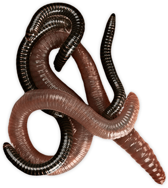 Transparent worm. Worms group png stickpng