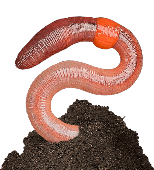 Transparent worm soil. Download free png earthworm