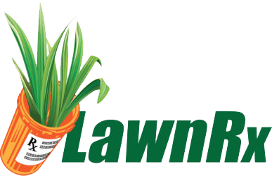 Transparent worm yard. Lawn care services aeration