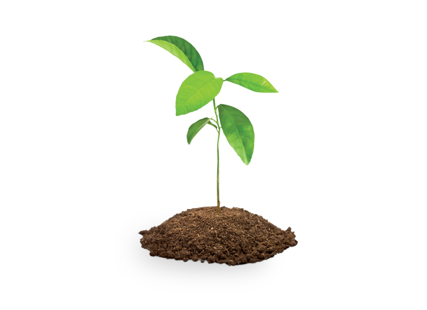 Tree and soil png. Four saplings save the