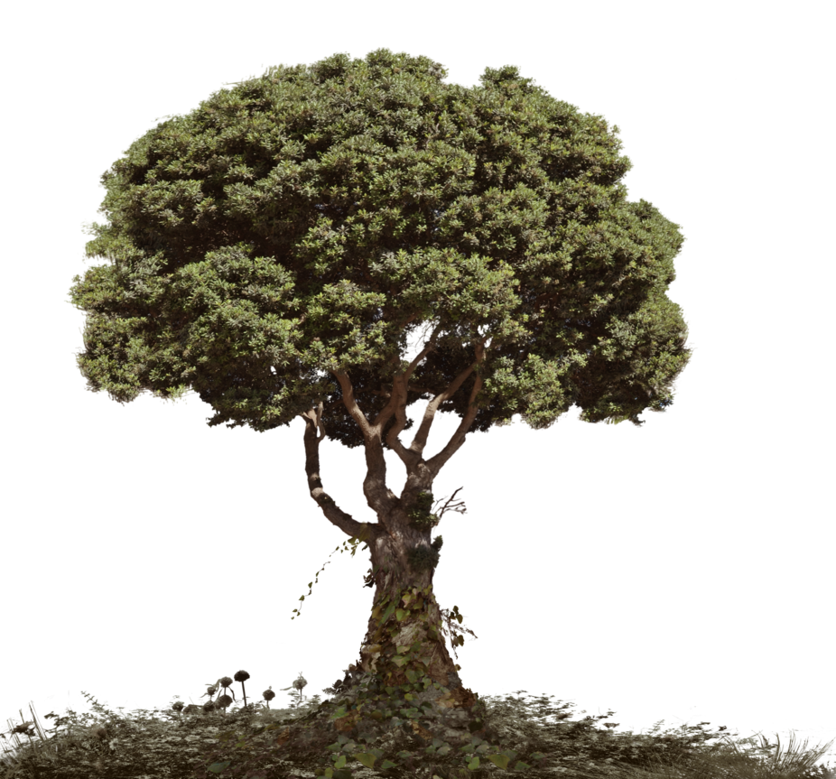 Tree and soil png. Dead with foliage stock