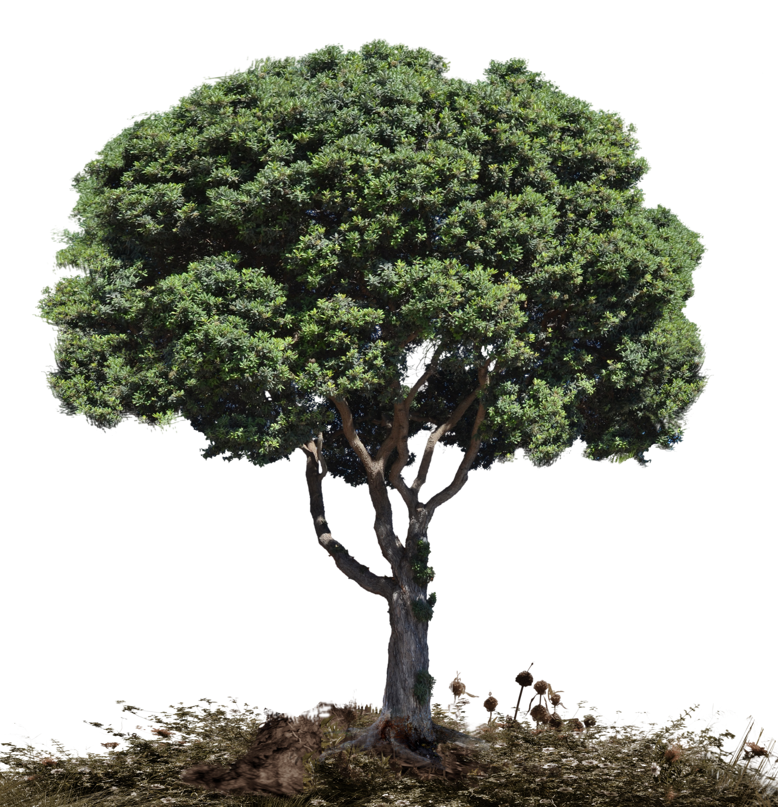 Tree and soil png. Stock in landscape photo