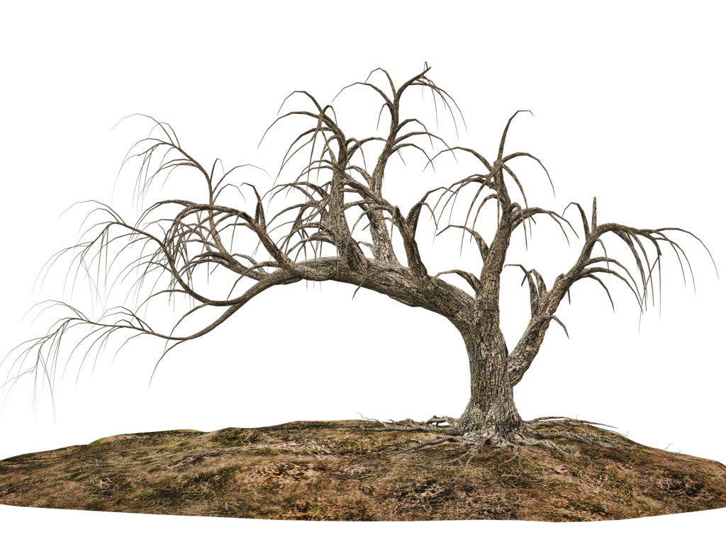 Tree and soil png. Trees stock by roy