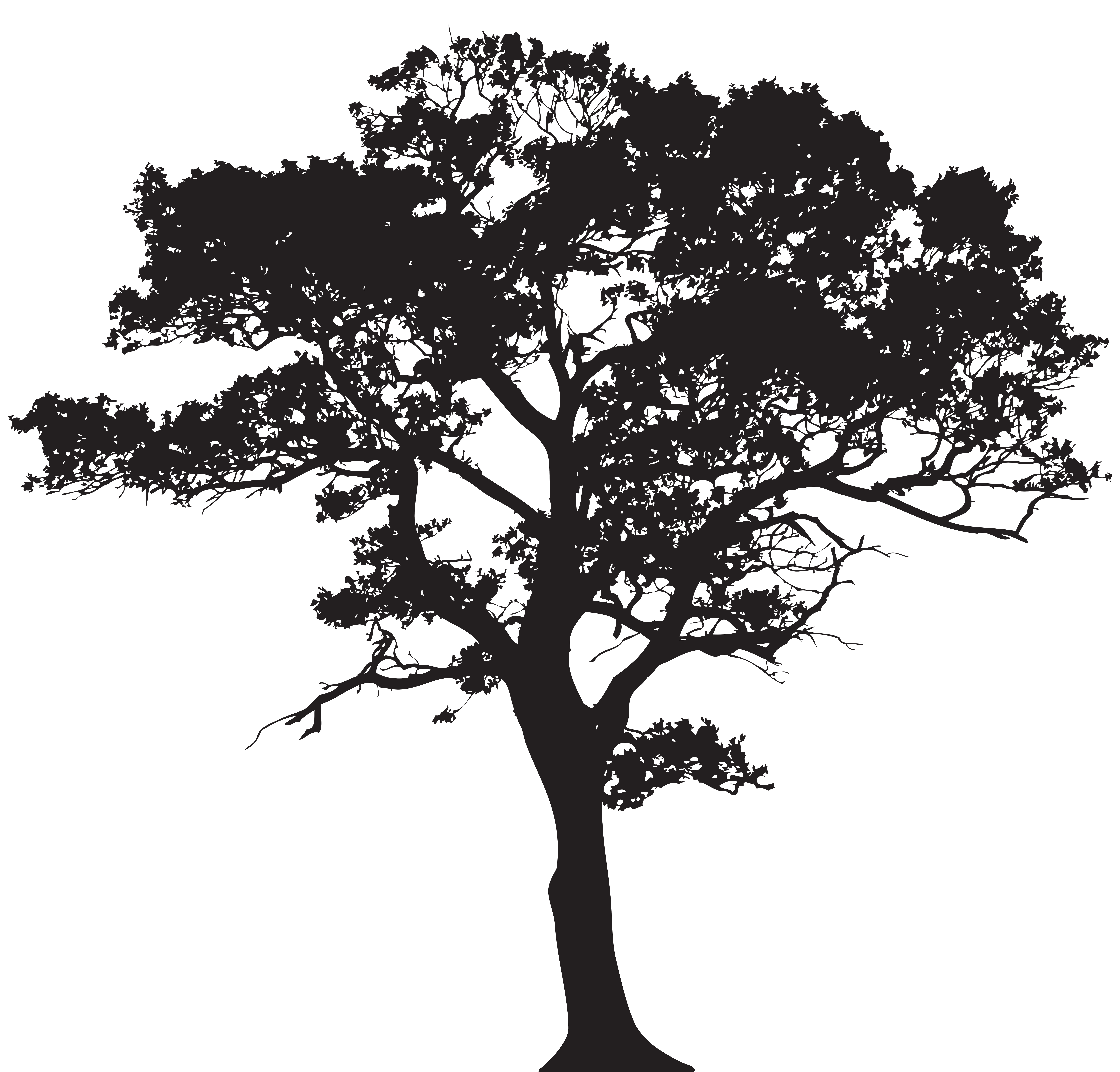 Black trees png. Silhouette tree clip art