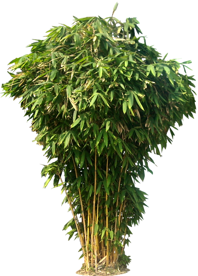 Jungle plants png. Tree images free