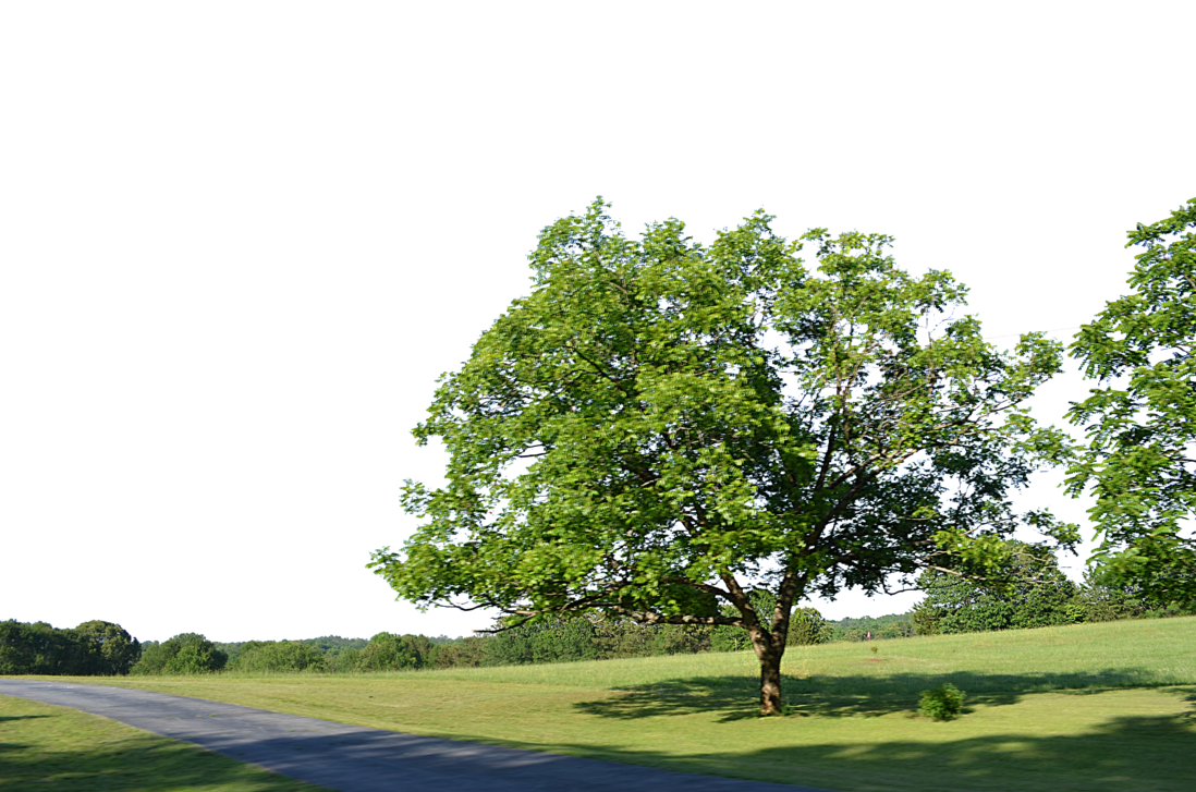 Country landscape png. Tree along road background