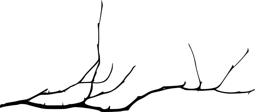 Branch png. Simple tree free images