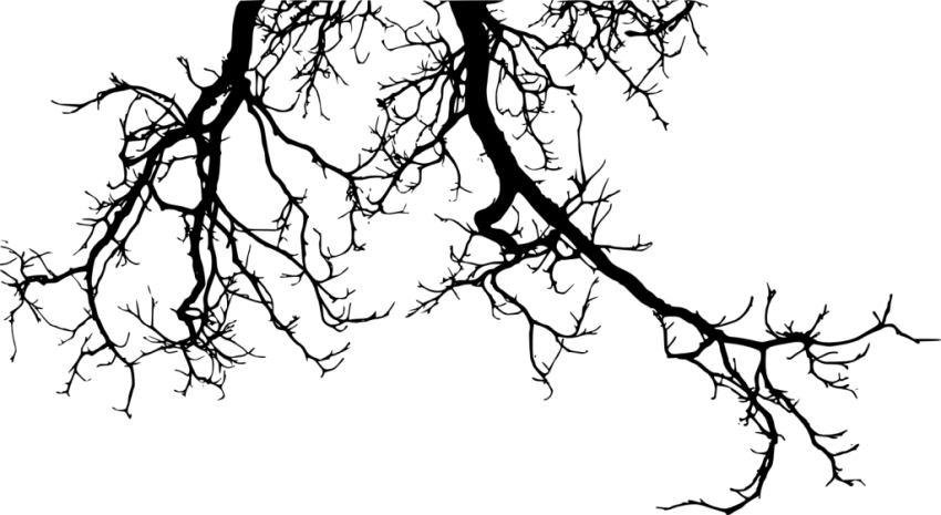 Png tree branch. Branches silhouette free images