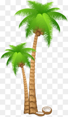 Trees clipart buko. Coconut leaves png images