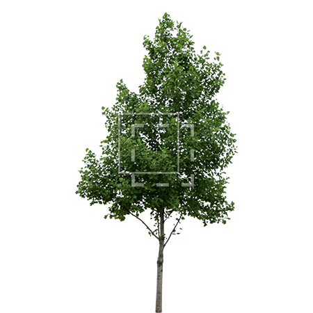 Tree cutout png. Perfectly parent category cutouts