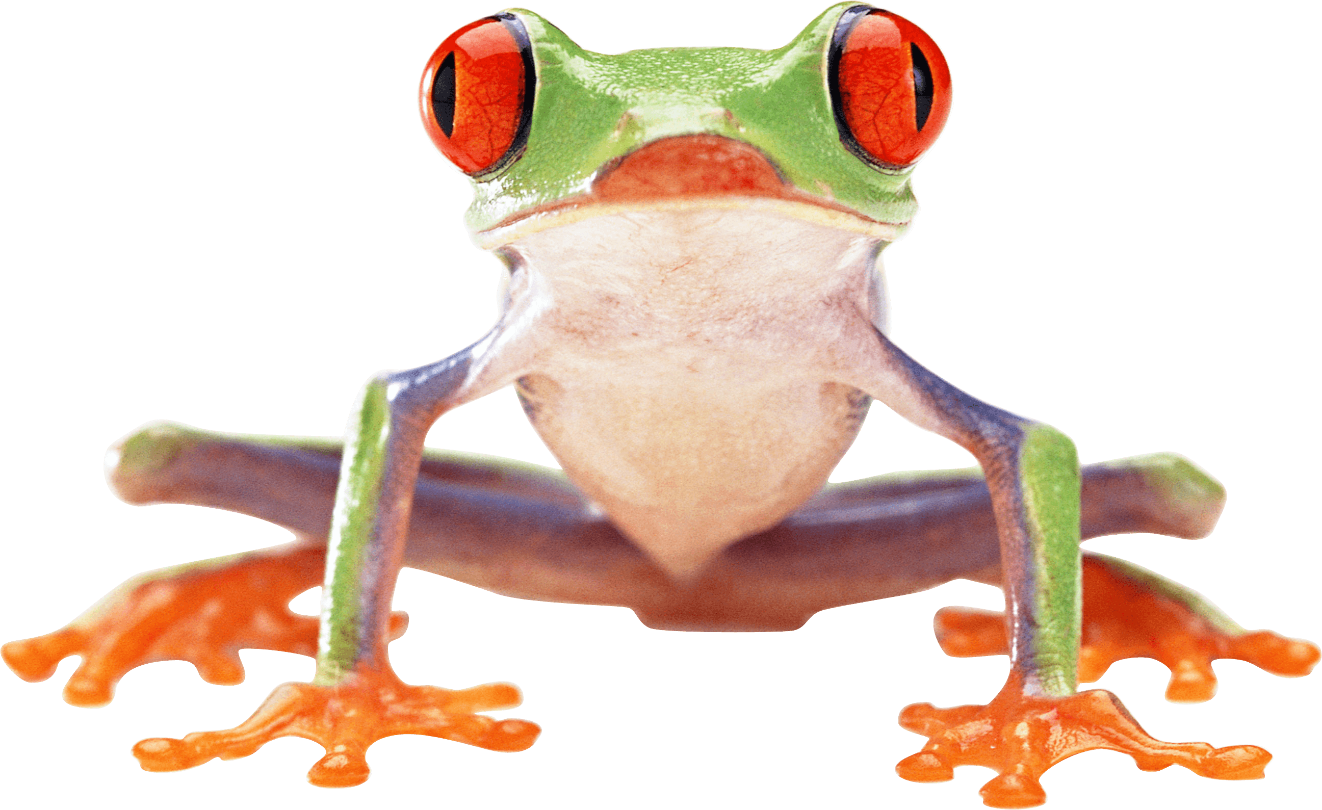 Crazy green image purepng. Wednesday frog png banner free download