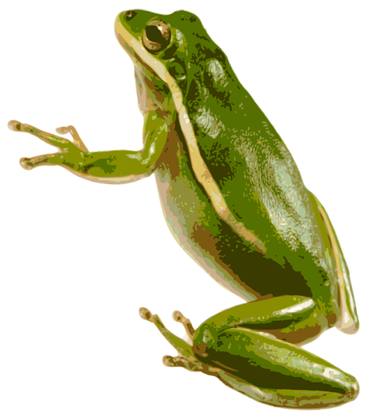 Tree frog png. Free icons and backgrounds