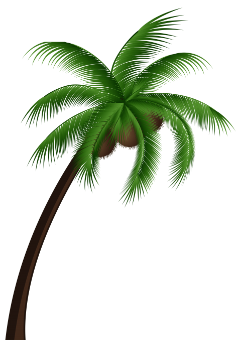Palm png free images. Leaf clipart coconut tree picture freeuse stock