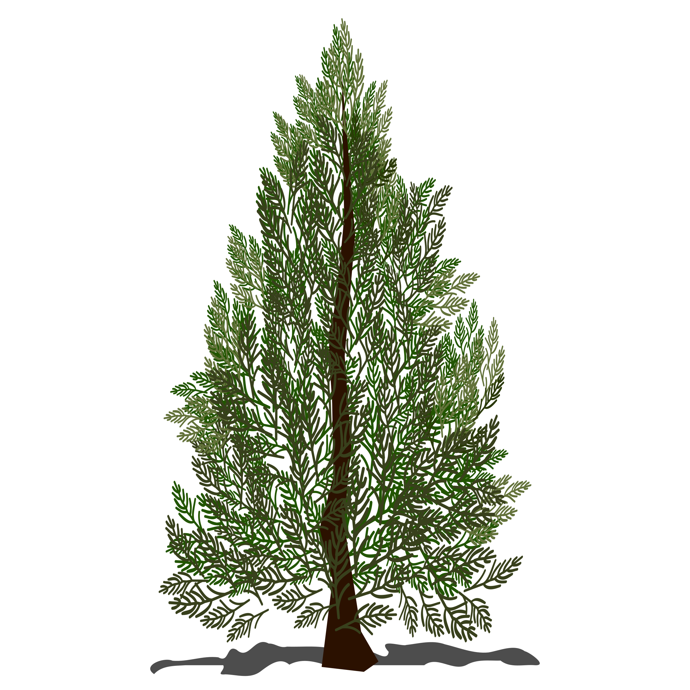 Tree pine png. Icons free and downloads