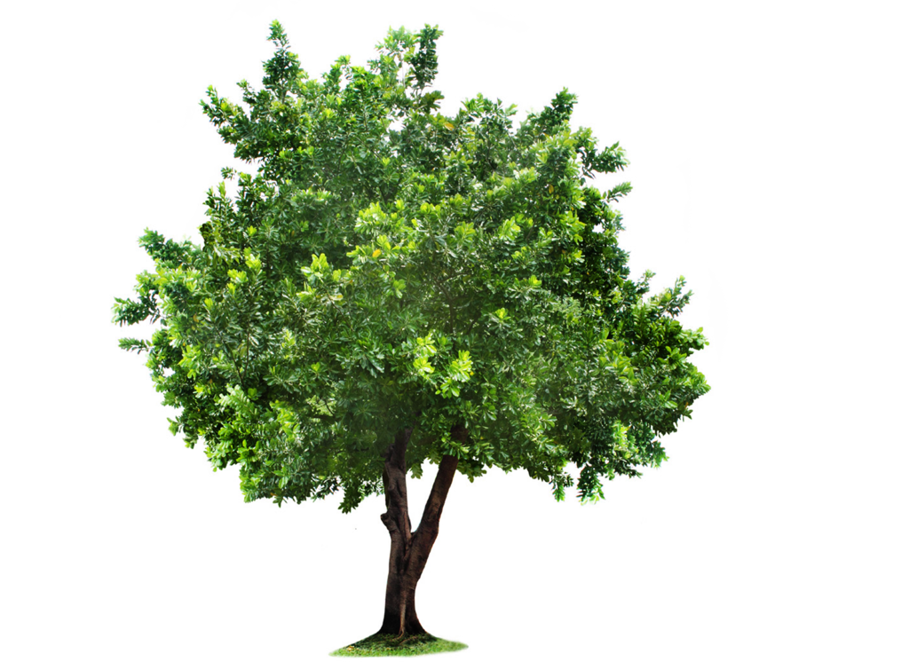 Tree png file free download. Transparent images all image