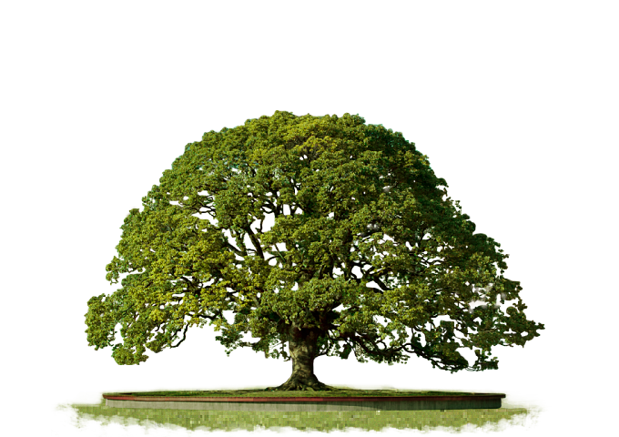 Trees png top view. Tree transparent images all