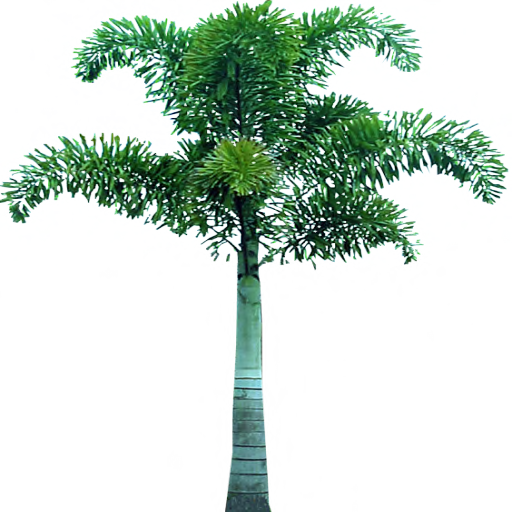 Tree png free download. Palm clipart web icons