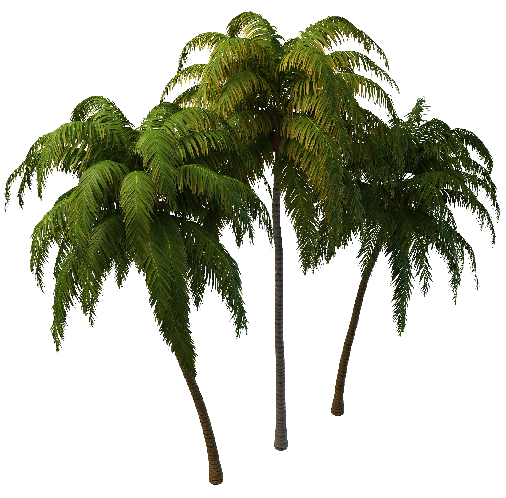 Tree png free download. Coconut images transparent pngmart