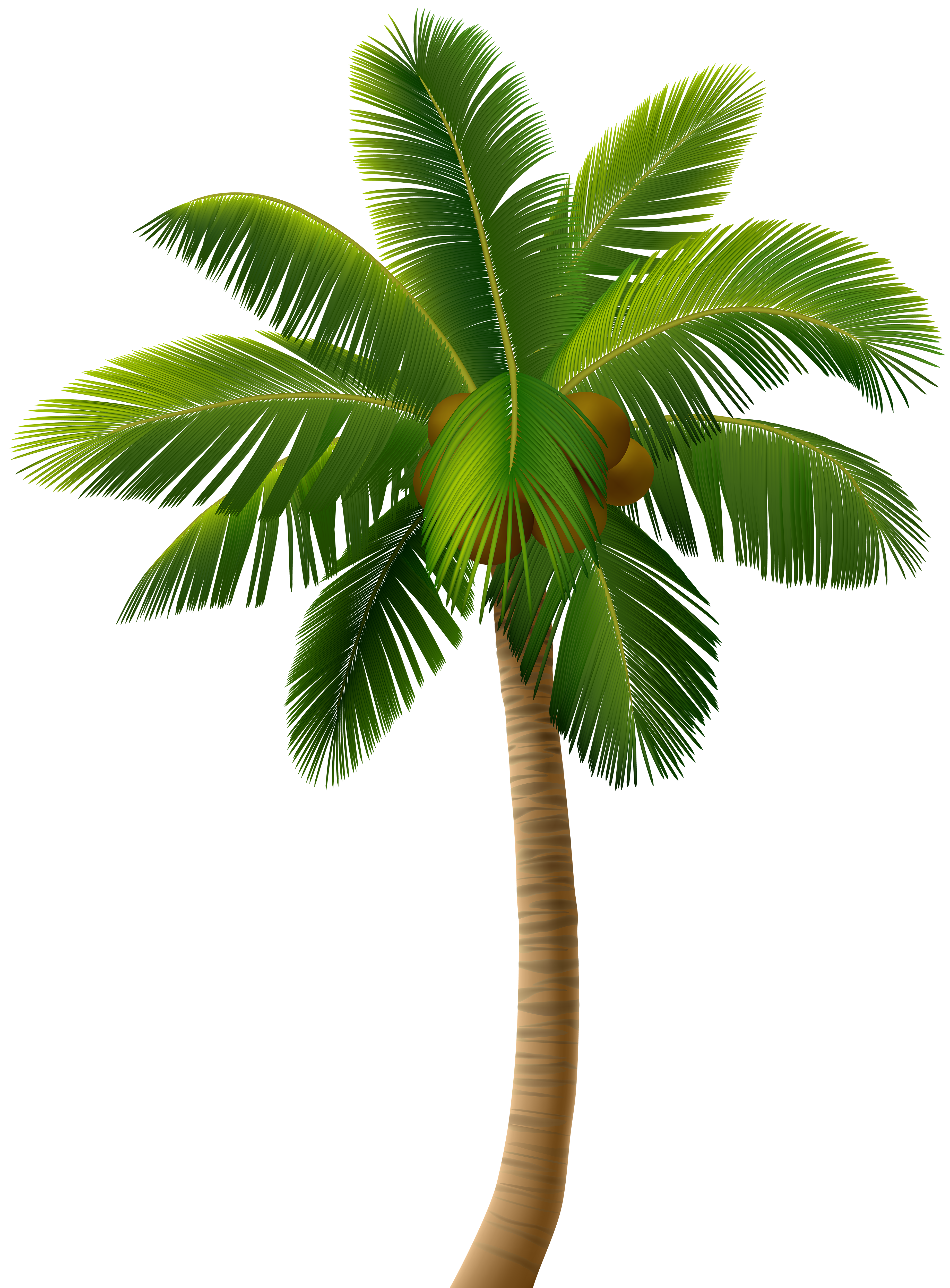 Tree png free download. Palm clip art image