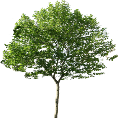 Tree png image. Download free transparent and