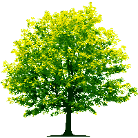 Tree graphic png. Download free photo images