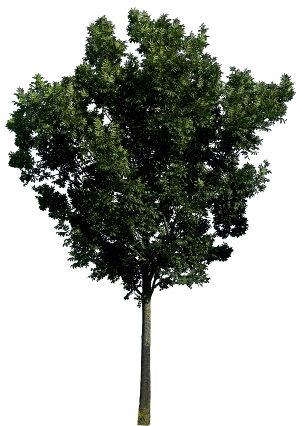 Tree png images free download. Image picture