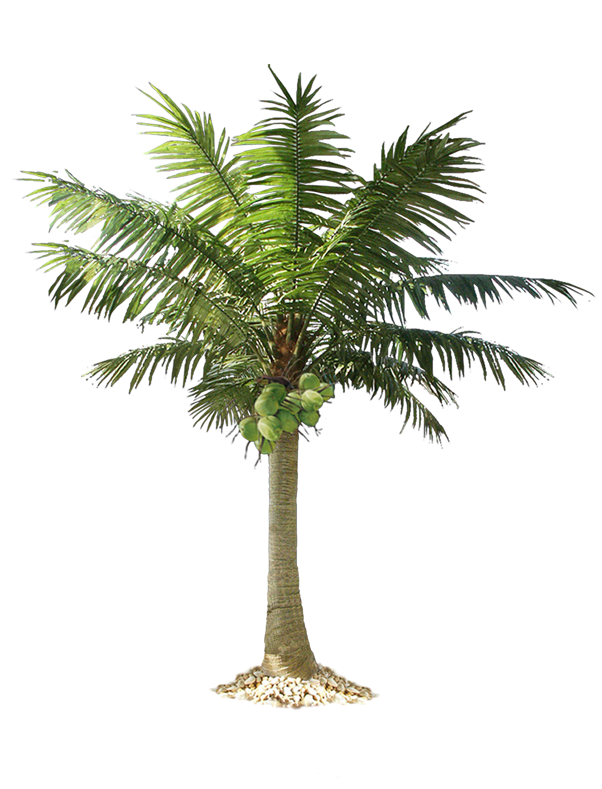 Palm tree photoshop png. Free download images icons