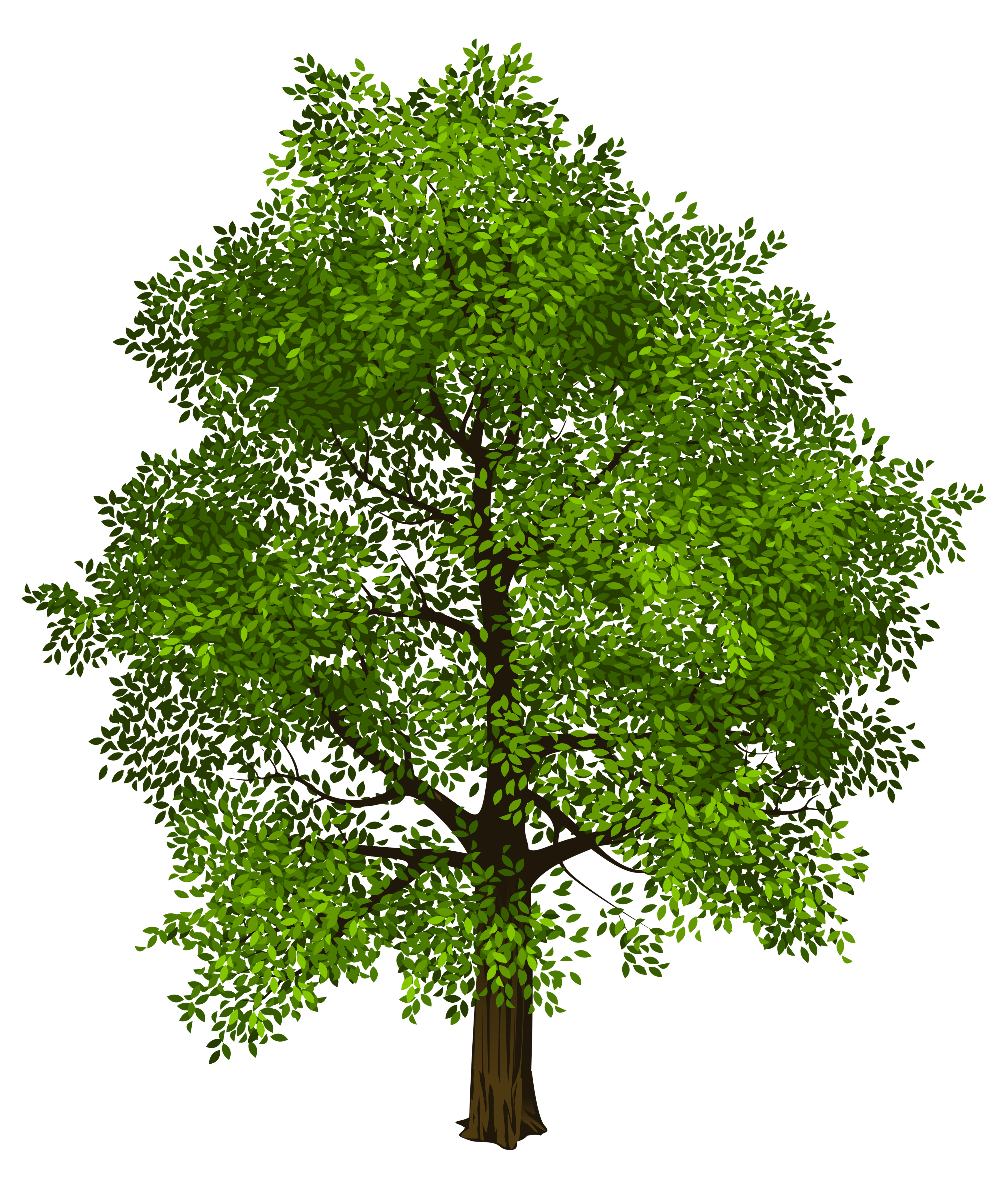 Tree png images free download. Transparent green picture gallery