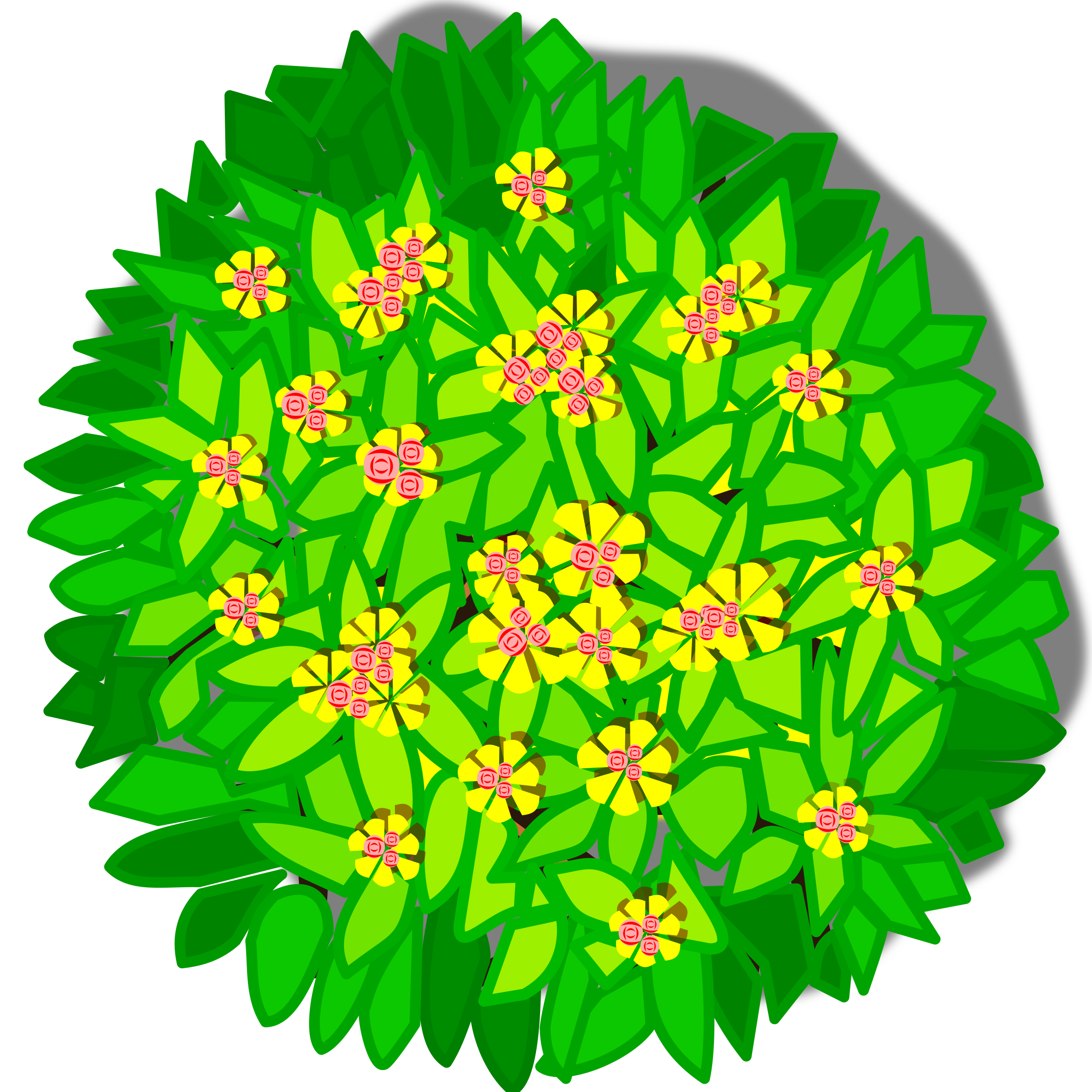 Tree png top view. Clipart big image