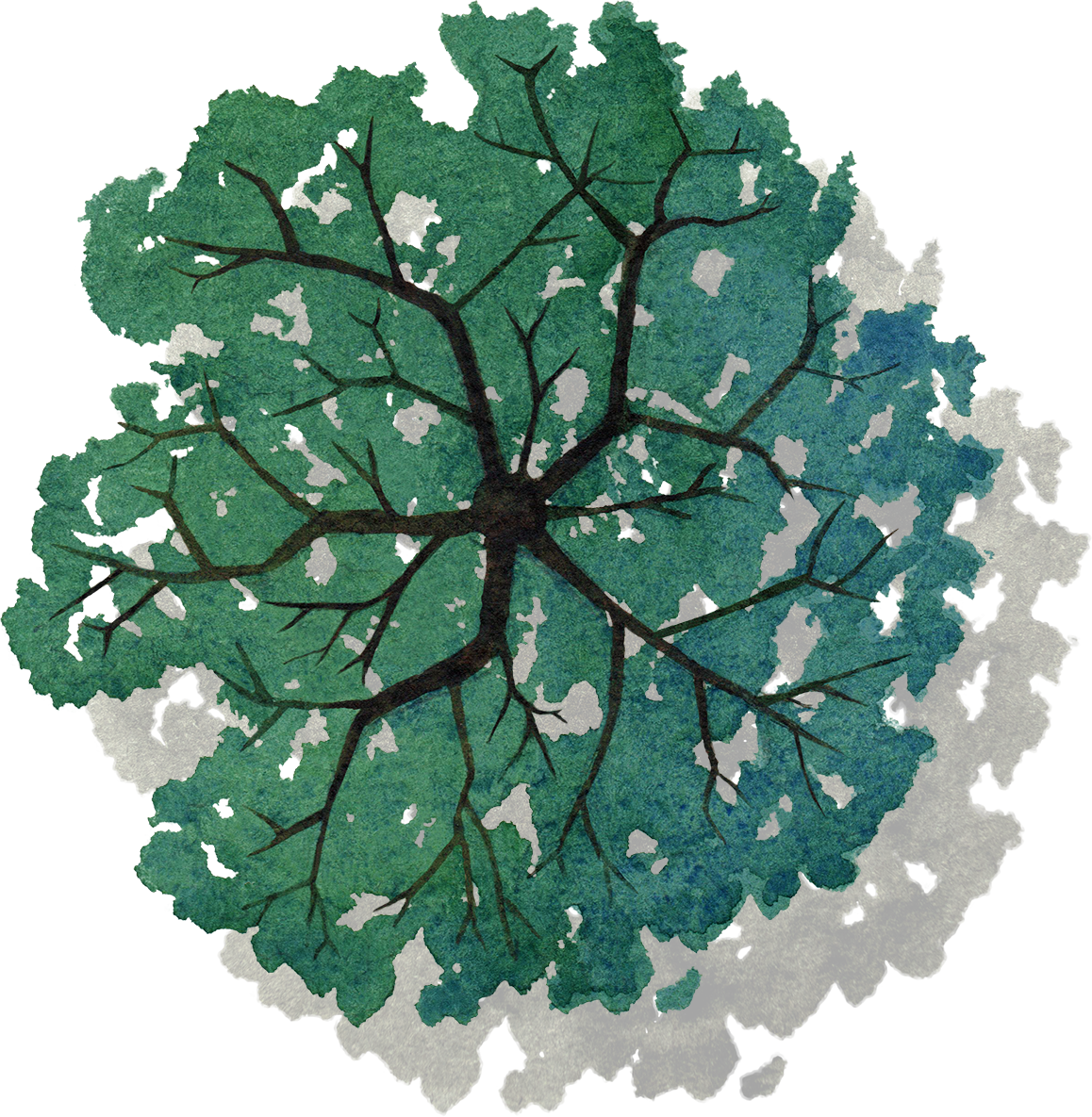 Tree png top view. Plan painted green of