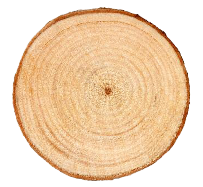 Tree ring png. Aastarxf ngad trunk rings