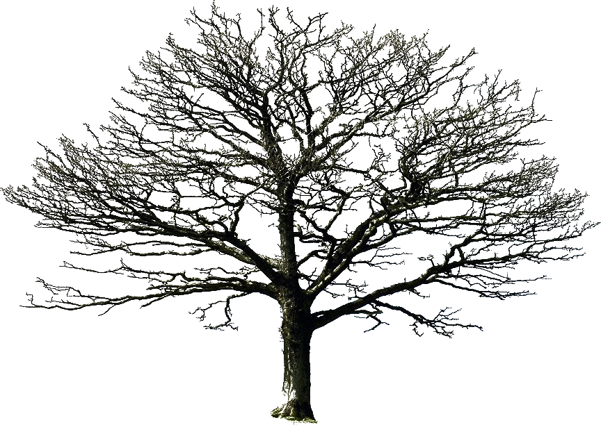 Tree shadow png. Rvore sombra nature